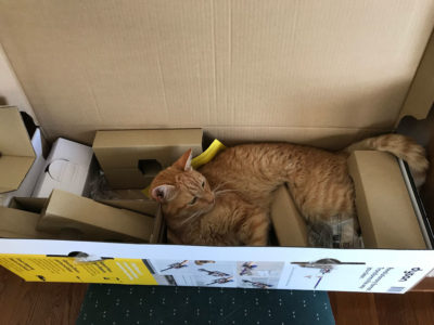 Ginger adopted the Dyson box.